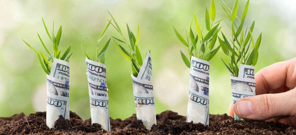 Planting money trees