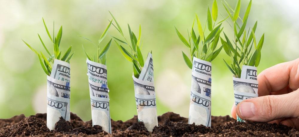 Planting money trees